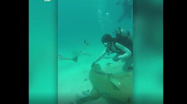 Hayatını tehlikeye atarak köpek balığını kurtardı