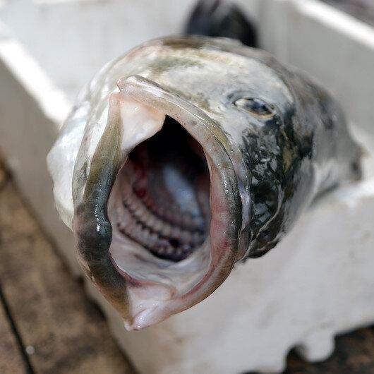 Balıkçılar tekneye zor çıkarılar