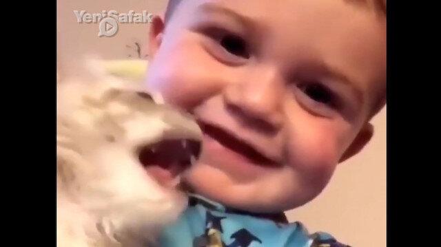 Kediyle küçük çocuğun taklit yarışı