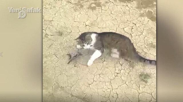 Kedinin elinden kurtulmak için ölü taklidi yaptı