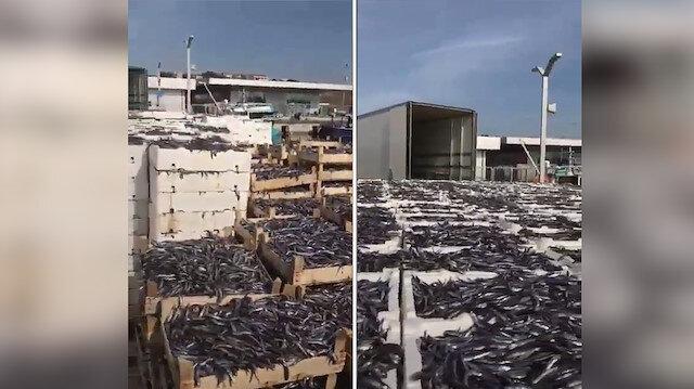 Stokçular tonlarca balığı piyasaya sürmüyor!