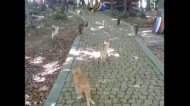 Kediler Mozartı duyunca yemeğe koşuyor