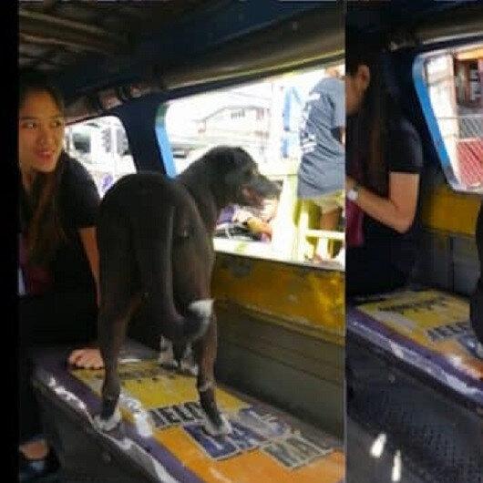 شاهد: كلب يفتقد صاحبته فيستقل حافلة بمفرده للذهاب إلى عملها