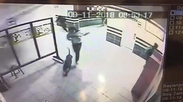 Okula giren pitbull vurularak etkisiz hale getirildi