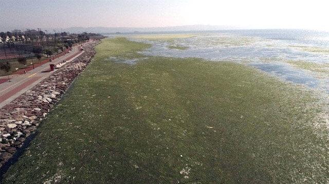 İzmir Körfezi'nin kaplayan yeşil görüntü