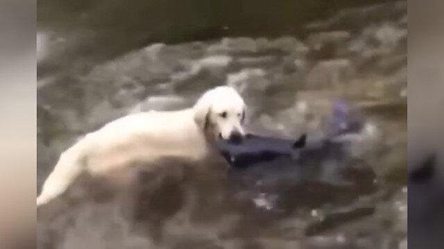Balık avlayan köpek
