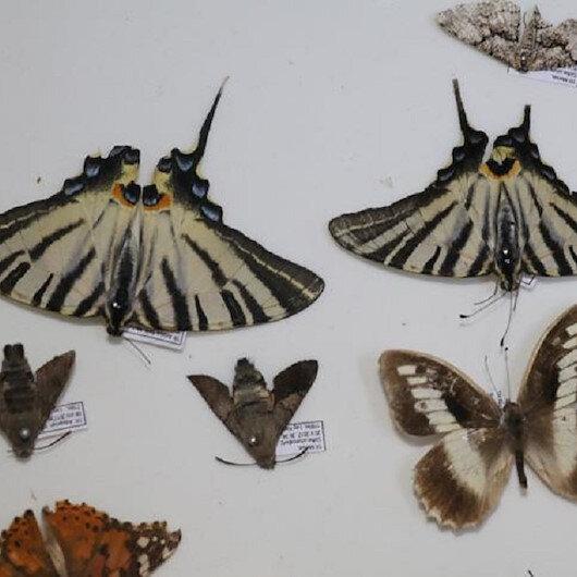 Böcek türleri her geçen gün artıyor
