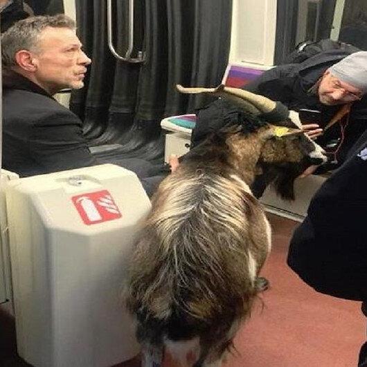 Paris metrosunda çaldığı keçi ile yakalandı