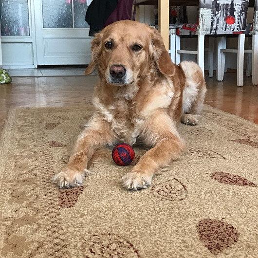 Apartmanda köpek bakımıyla ilgili Yargıtaydan karar