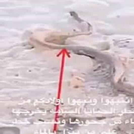 شاهد: السيول تخرج الأفاعي الضخمة من جحورها