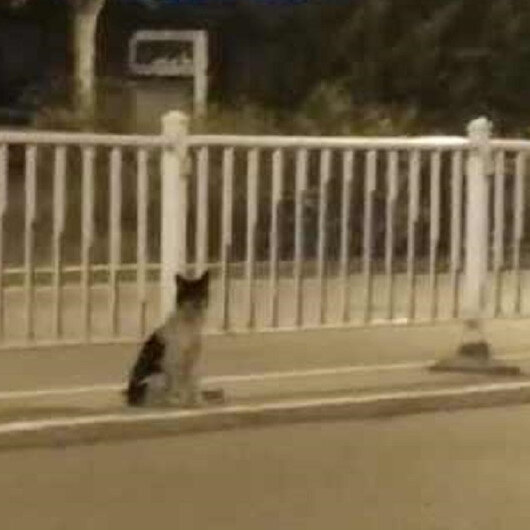 بالفيديو: كلب يمكث بنفس الطريق منتظرا صاحبته المتوفاه منذ ثلاثة أشهر