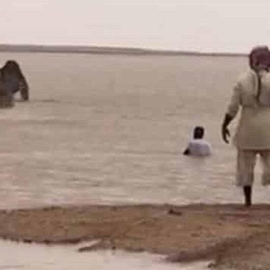 """بالفيديو: """"شهامة"""" مالك إبل سعودي تخلص قطيع جاره الكويتي من احتجاز السيول لها.. هنا التفاصيل"""