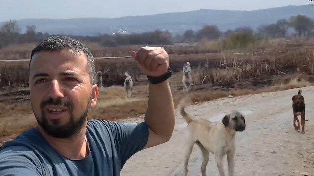Başıboş sokak köpeklerinden böyle kurtuldu