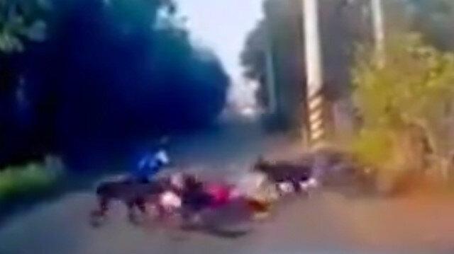 Sokak köpeği dehşeti kamerada