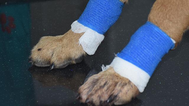 Yavru köpeği bacaklarından vurdular