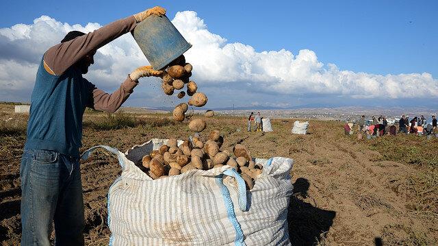 Ahlat Ziraat Odası Başkanı Demirden: Patateste marka haline geldik