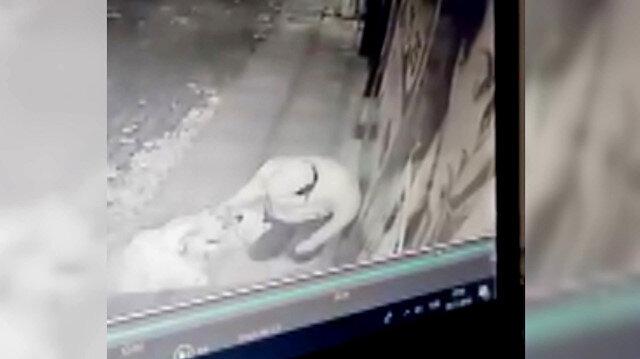 Üşüyen sokak köpeğinin üstünü kendi montuyla örttü
