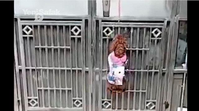 Biri kapıyı açtı biri tuttu hepsi kaçtı: Köpeklerin inanılmaz iş birliği