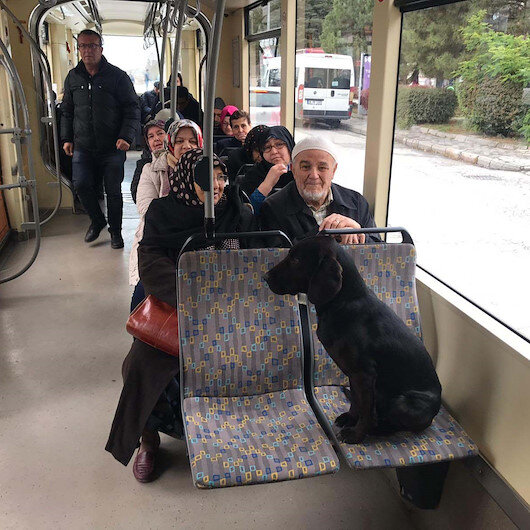 Eskişehir'de üşüyen sokak köpeği tramvaya bindi