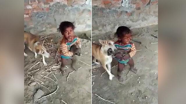 Anne köpek yavrusunu aşıran miniğe izin vermedi