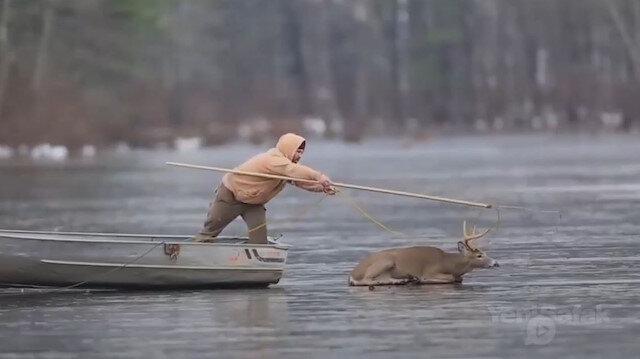 Donmuş göle yapışan geyiğin kurtarılma anları sosyal medyayı salladı