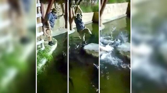 Timsah dolu havuzun içine düştü