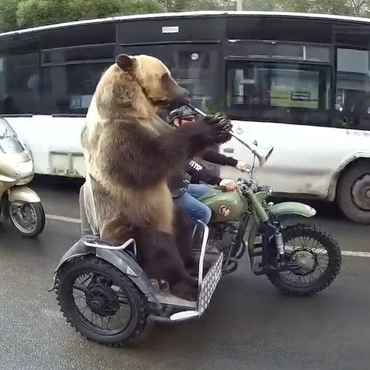 Rusya'da motosikletli ayı trafiğe takıldı