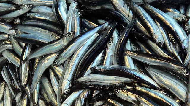 Havaların soğumasıyla artan hamsi avı, fiyatları düşürdü.