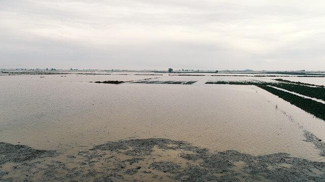 Yaşanan yağış nedeniyle çifçilerin mahsülleri sular altında kaldı.