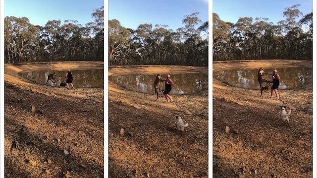 Köpeklerini korumak isteyen adam kangurudan dayak yedi