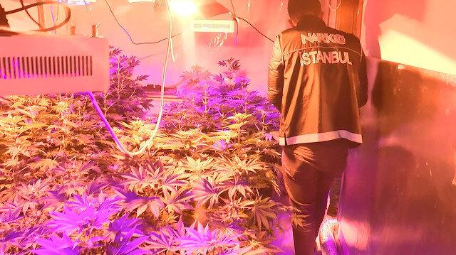 Polis ekipleri, 5 odada kurulmuş uyuşturucu seralarıyla karşılaştı.