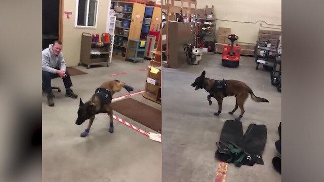 Kar botu giyen K-9 köpeğinin yürüme mücadelesi