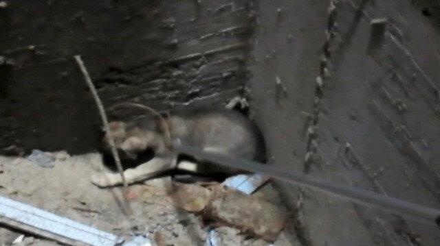 Asansör boşluğuna düşen yavru köpeği annesinin havlaması kurtardı