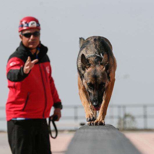 مواطن تركي يقضي 8 ساعات يوميًّا في تربية كلاب فرق الإنقاذ