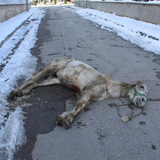 Ölüme terk edilen yaralı at tedaviye alındı