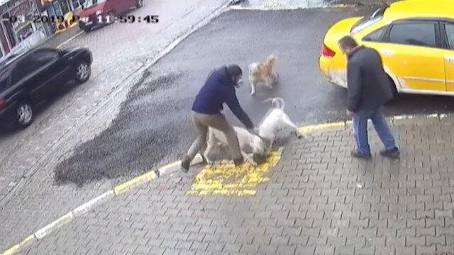 Pitbul dehşeti kamerada: Yavru köpeği parçaladılar