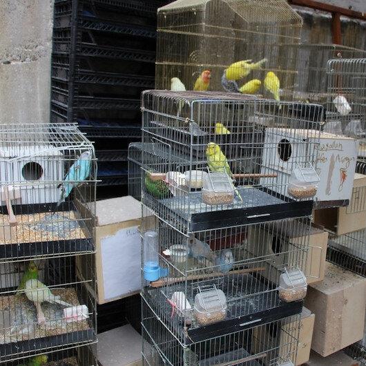 80 papağan yanmaktan son anda kurtarıldı