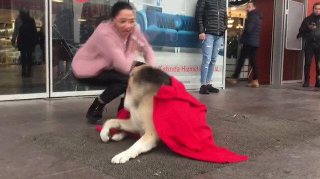 Üzerini örttüğü köpek tarafından ısırılıyordu