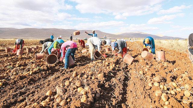"""Yerlikaya, """"Türkiye'nin esas eğilmesi gereken nokta yüzde yüz yerli tohum ıslahı yapmaktır"""" dedi."""