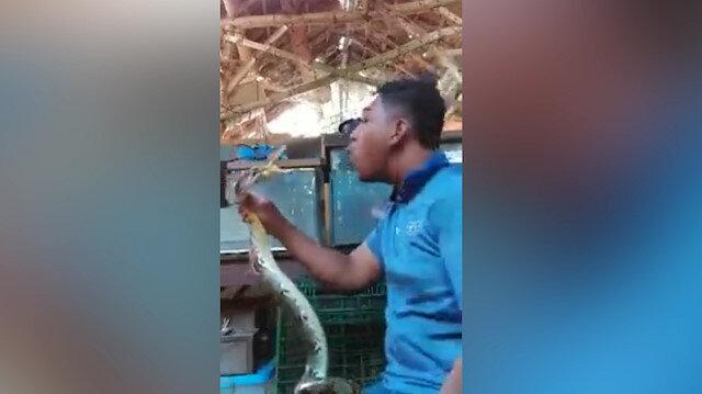 Şov yapmak isterken kafasını yılana kaptırdı