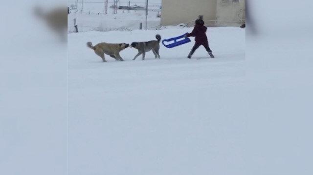 Çocuklarla köpeklerin kızak kapma mücadelesi renkli anlara sahne oldu