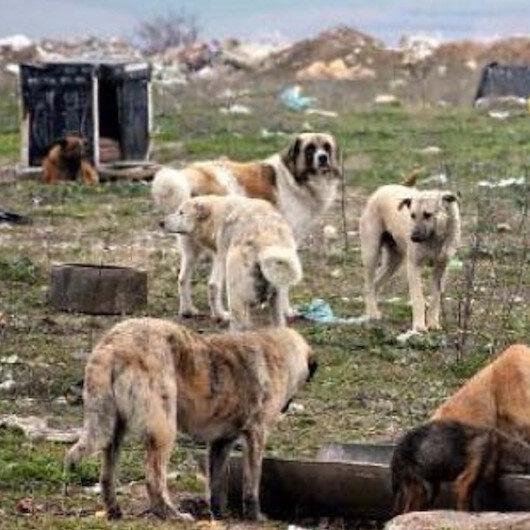 Liseli çocuğu öldüren köpekler kendi ırkını yedi