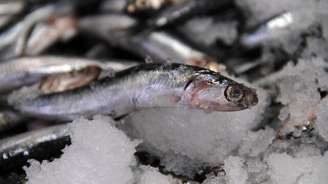 Hamsinin kulağına kar suyu kaçtı