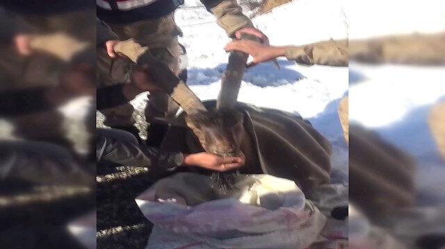 Jandarma yaralı dağ keçisini elleriyle besledi