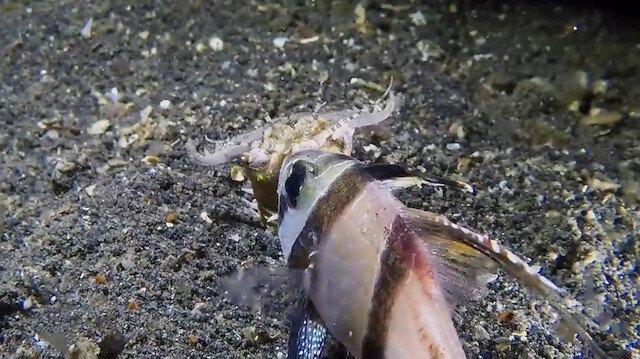 Solucanın balık avı kamerada