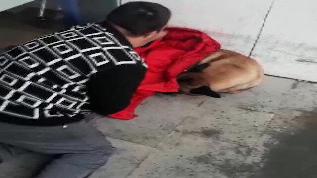 Üşüyen köpeğin üzerine montunu örten down sendromlu genç