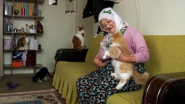 Üşümesinler diye evinde 58 kediye bakan Nuriye Teyze