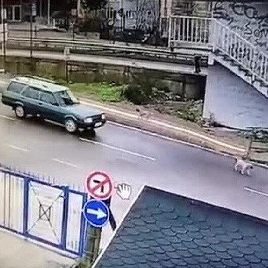 Yavru köpeği ezip kaçan sürücü yakalandı