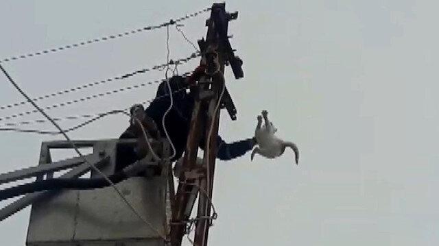 Elektrik direğinde üç gün mahsur kalan kedinin kurtarılma anı
