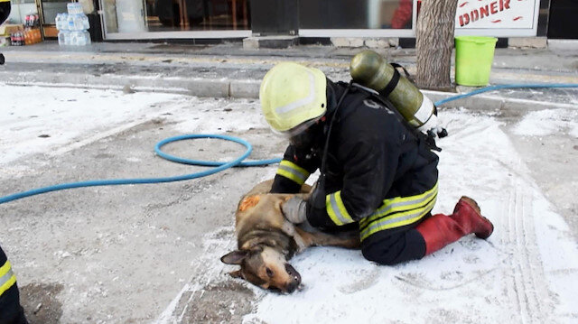 İtfaiye erinin dumandan zehirlenen köpeği kurtarma çabası